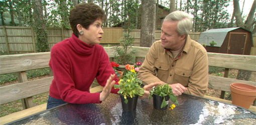 Tricia Craven Worley and Danny Lipford discuss watering houseplants.