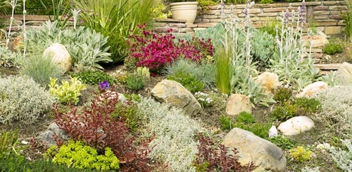 Garden with drought tolerant plants.