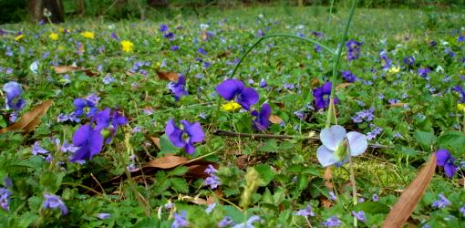 How To Control Weeds In Your Lawn Today S Homeowner