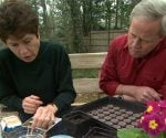 How to Plant Small Seeds in Your Garden