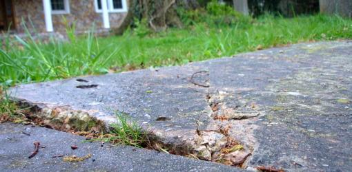 Sidewalk Damaged By Tree Roots Today S Homeowner