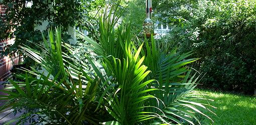 Palm plant in summer garden