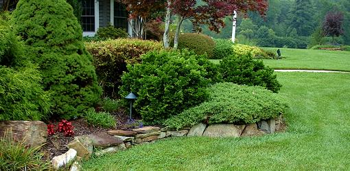 How To Plant Container Grown Trees and Shrubs