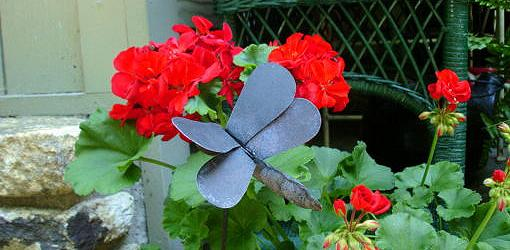 How To Grow Geraniums Over The Winter Today S Homeowner