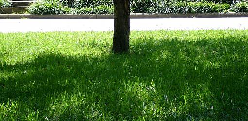 How To Grow Grass In Shade Today S Homeowner