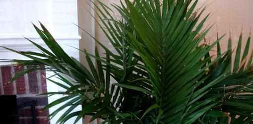 plain house plants identification pictures to avoid in the - House Plant Identification Guide By Picture