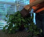improving indoor air quality with houseplants