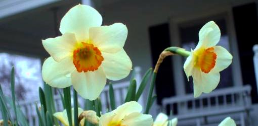 Is It Safe to Use Pre-Emergent Weed Preventers Around Bulbs?