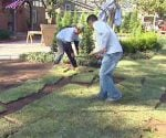 Laying sod in yard