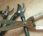 Pruning tools in need of sharpening