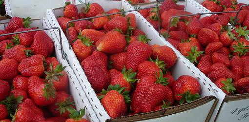 How to Pick and Store Fresh Strawberries from Your Garden