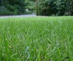 Weed free lawn.