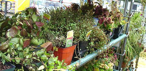 Plants on rack in store.