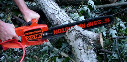 Cutting limb with chainsaw