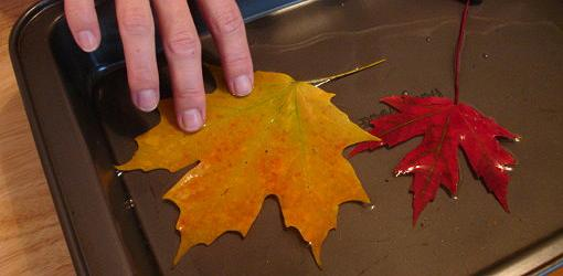 Leaves submerged in glycerin/water solution