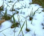January Thaw and Indian Summer: Fact or Folklore?