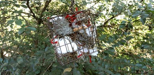 Suet cage filled with nesting material