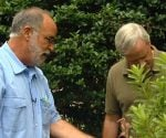 landscape architect Tony Seymour and home improvement expert Danny Lipford examining shrubs in yard