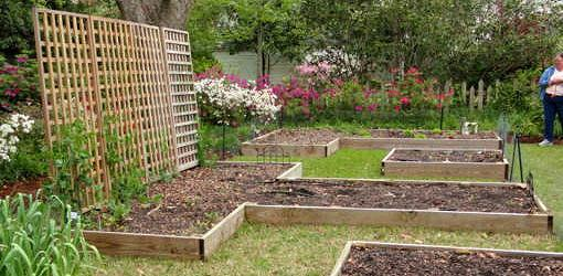 Advantages Of Raised Planting Beds For Your Garden Today