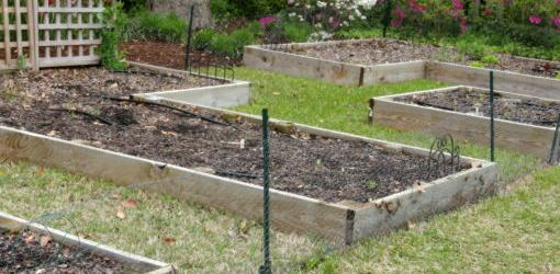 Multiple wood raised beds with wide aisles for easy access