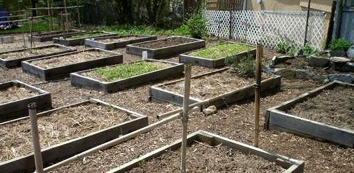 what kind of soil for garden bed 2