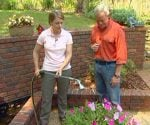 How to Water Plants in Your Yard