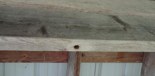 Hole in bottom of wood floor joist made by carpenter bee