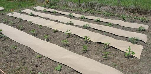 Biodegradable paper weed barrier