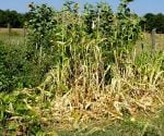 Vegetable Garden Price to Pay for a Summer Vacation