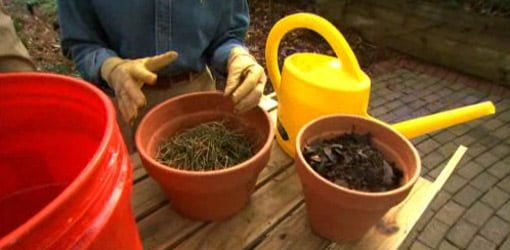 Pots full of compost and alfalfa