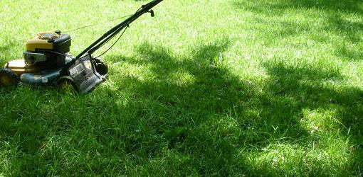 Lawn mower on shaded, fescue grass yard