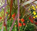 Colorful Ideas for Fall Flower Containers