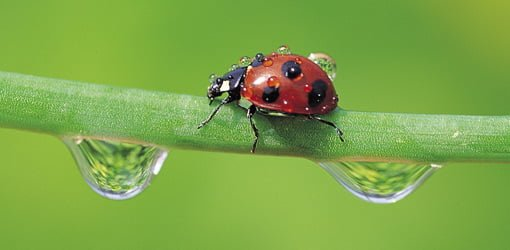 How To Use Predator Insects To Control Garden Pests