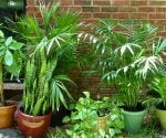 Guide to Poisonous and Nontoxic Houseplants