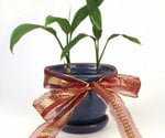 Top 10 Lawn & Garden Gift Ideas for 2011