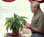 Danny Lipford with houseplant to improve indoor air quality and reduce VOCs