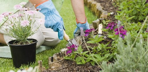 Planting flowers in a garden.