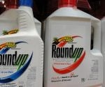 When to Plant After Using Roundup Weed Killer