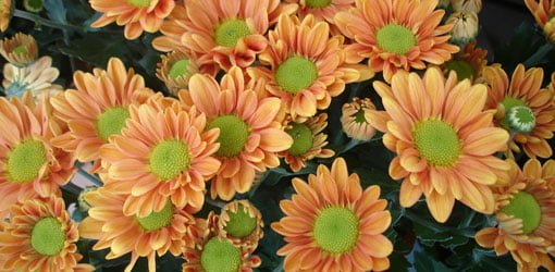 Top 10 edible flowers to grow in your yard or garden today s