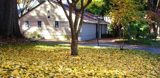 House with fall leaves under tree in yard.