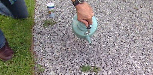 Pouring boiling water on weeds in a gravel driveway.