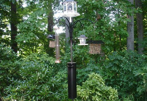 Bird feeders with stovepipe squirrel guard.