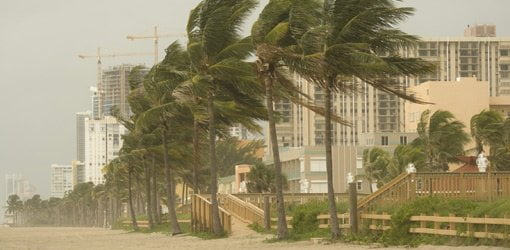Trees bending in high winds from a hurricane.