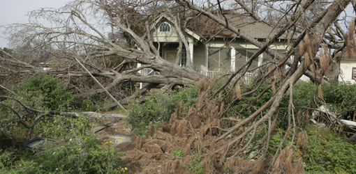 House with trees down after hurricane.