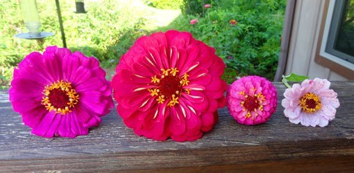 Different size flower blossoms on window ledge.