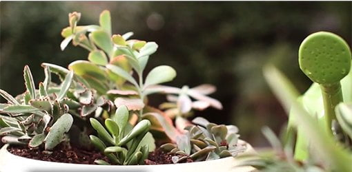 Ideas on how to grow succulents from Southern Patio.