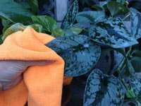 how-spring-clean-houseplants-5