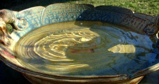 How To Clean And Maintain A Birdbath In Your Yard Today