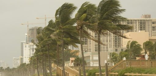 Hurricane winds blowing palm trees on coast.