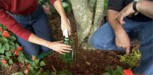 How to Target Weeds in Your Yard